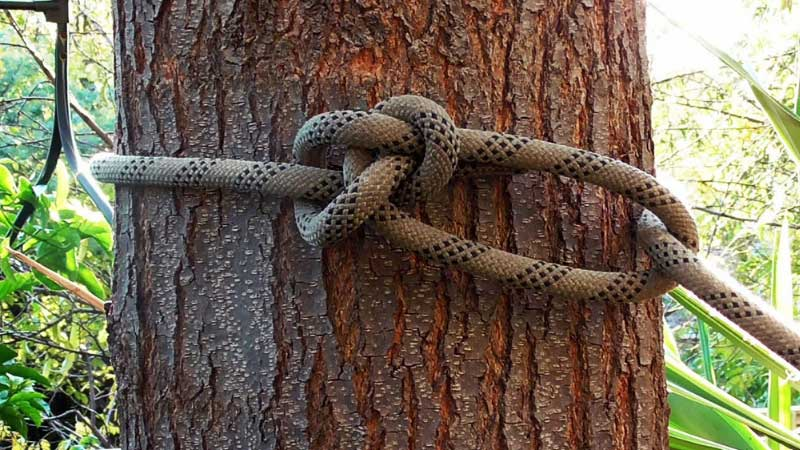 Best Rope for Pulling Trees