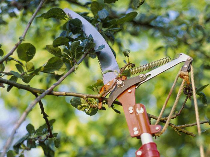 Uses of a Pole Saw